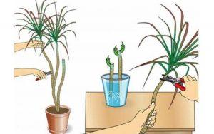 Organic fertilizer Fortis combi