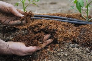 Organic Nitrogen Fertilizers