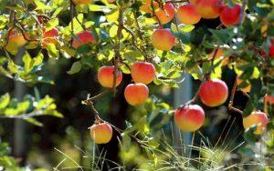 Органические азотные удобрения