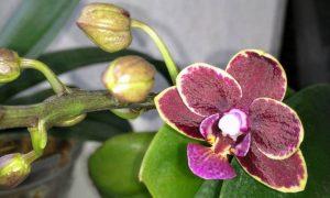 Комнатные цветы: подкормка органическим удобрением
