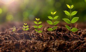 Що таке стимулятор росту рослин